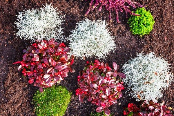 jesenske zasaditve rož na grobovih - 16