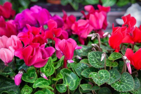 jesenske zasaditve rož na grobovih - 19