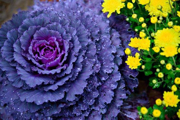 jesenske zasaditve rož na grobovih - 4