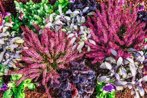 jesenske zasaditve rož na grobovih - 14