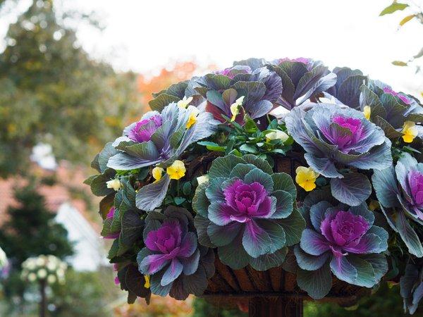 jesenske zasaditve rož na grobovih - 11