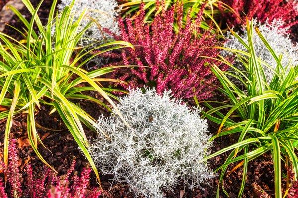 jesenske zasaditve rož na grobovih - 15