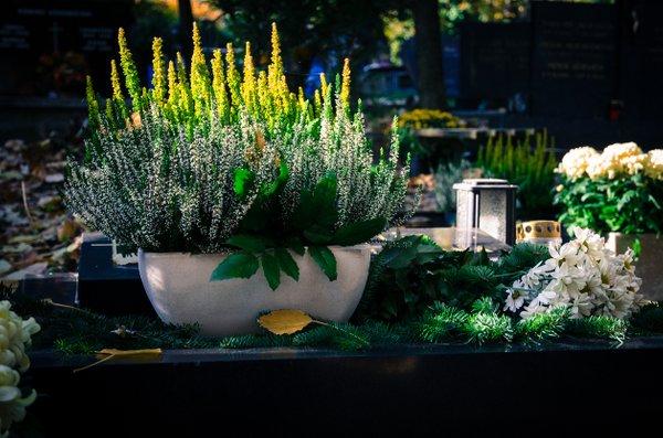 jesenske zasaditve rož na grobovih - 18