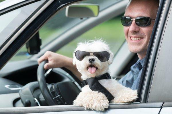 moški in pes v avtu