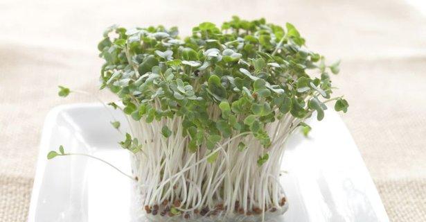 Kalčki brokolija