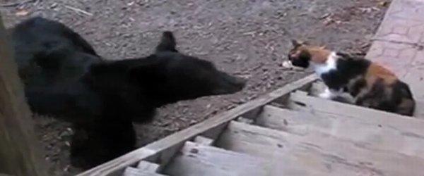 mačka proti medvedu - 2