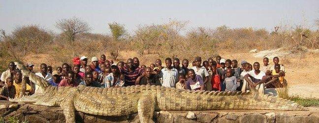 Največji krokodil na svetu - 2
