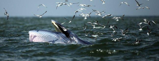 Sinji kit