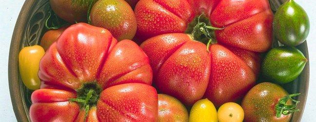 Različne vrste paradižnika