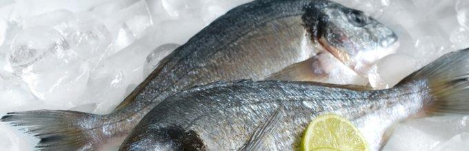 Sveža riba