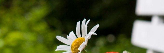 Šopek travniških rož