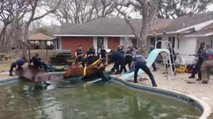 Reševanje bika iz bazena - 1