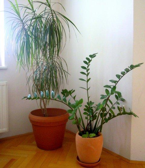 Sobne Rastline Sobne Rastline