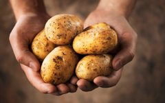 Vrste krompirja in njihova uporaba v kuhinji