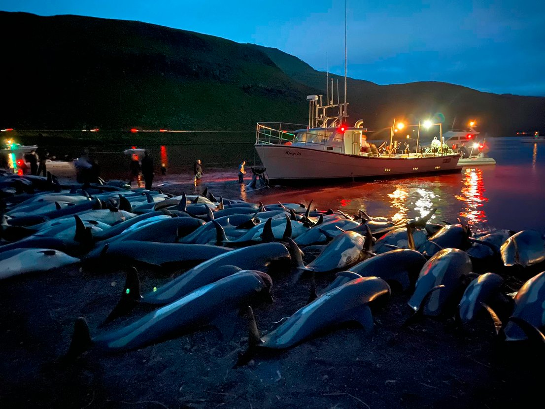 Delfini, Ferski otoki