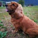 Psička Dona (Lastnica Ana)
