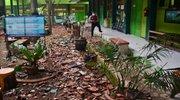 Potres na Javi.