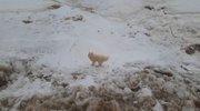 Psička Aika na ledeni ploščadi.