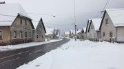 Maček hodi po sveže zapadlem snegu v Kočevju.