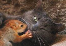Nenavadna družina: mačka posvojila veveričje sirote
