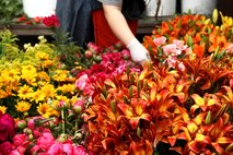 Cvetličarne in vrtnarije spet odprte, dovoljena tudi gradbena dela