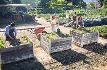 Vrtičkarji hitijo s spomladanskimi zasaditvami