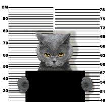 Pazniki ujeli mačko, ki je tihotapila mobilne telefone
