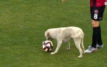 Prosti strel na nogometni tekmi izvedel kar ... pes