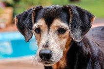 Slovenci za pse letno namenimo okoli 55 milijonov evrov
