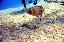 Zabeležili rekordno slanost Jadranskega morja: kaj to pomeni za morsko življenje?