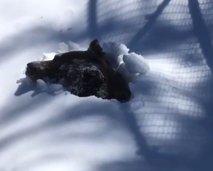 V objektiv ujela trenutek, ko se je medved prebudil iz zimskega spanja