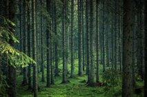 Gozdovi bi se lahko do leta 2050 spremenili v vir ogljika