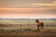 Mučenje živali v Vojščici: lastnik 13 konjem in oslu ni nudil prehrane