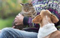 Bodo živali vendarle postale 'čuteča' živa bitja?