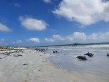 Na obali Nove Zelandije nasedlo in poginilo skoraj 100 kitov