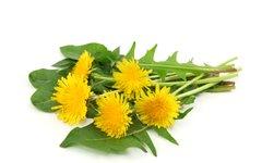 Uporabni niso samo listi, temveč tudi cvetovi!