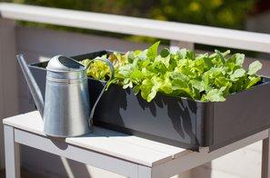 Zelenjava in začimbnice, ki jih je preprosto in enostavno gojiti