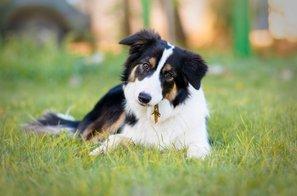 4 razlogi, zakaj vam vaš pes tako rad sledi
