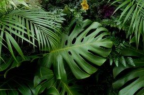 To so najbolj priljubljene sobne rastline