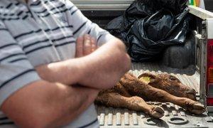 Kmetje v znak protesta ministru prinesli ostanke pokola domačih živali