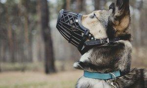 V Sloveniji je več kot dva tisoč nevarnih psov, na prevzgoji so le trije