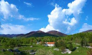 Sečnja v Trnovskem gozdu 'presega vse meje zdravega razuma'