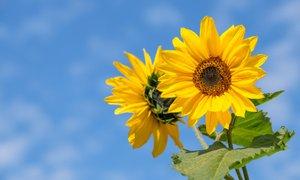 Po vremensko pestrem koncu tedna so pred nami sončni in prijetno topli dnevi
