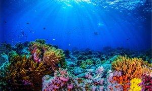 Spoznajte Veliki koralni greben skozi pripovedovanje Russella Crowa