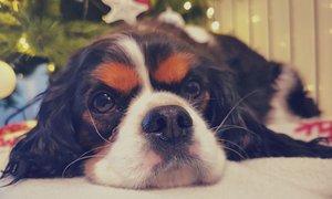 Nemška zavetišča pred božičem prepovedala posvojitve. Kako je pri nas?