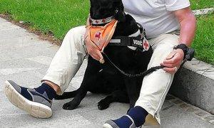 Namenoma vrgel petardo pred slepega Martina in njegovo psičko