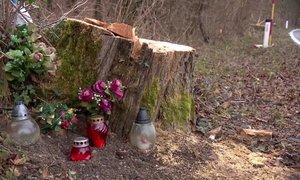 Gasilci preventivno požagali kar 74 dreves