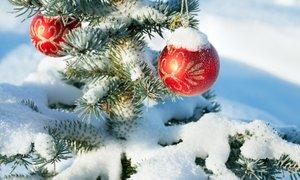 Zadnji bel božič po nižinah je bil leta 2007. Kakšen bo letošnji?