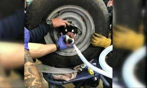 'Še nikoli nisem videla, da bi se pes zataknil v pnevmatiko'