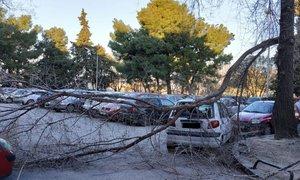 V Splitu rekodni sunki vetra: drevesa padala na avtomobile, več požarov
